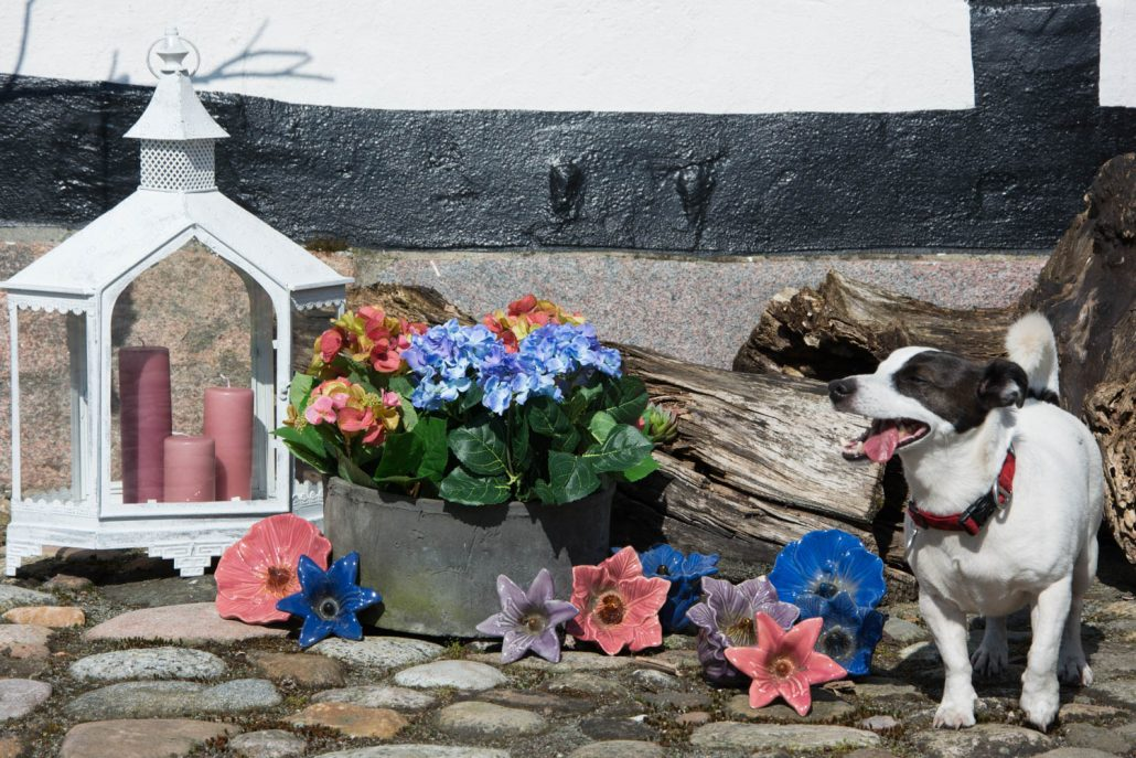 Pynt til haven - keramik blomster og hortensia