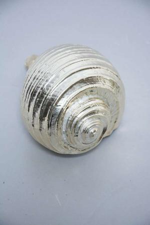 Sølv konkylie