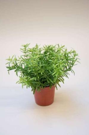Kunstig grøn plante. Kunstig krydderurt i potte