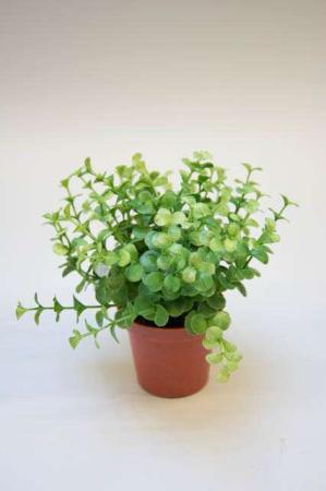 Kunstig grøn plante. Potteplante