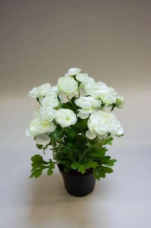 Kunstig ranunkel i potte, hvid