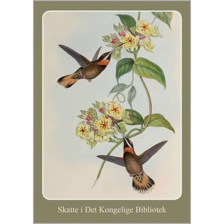 Kort med kuvert med motiver af kolibrier