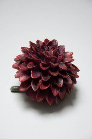 Dahlia blomst - bordeaux