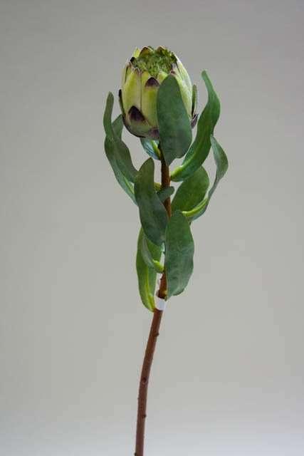 Kunstige blomster - grøn protea