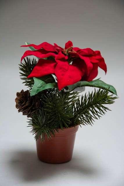 Lille kunstig julestjerne i potte