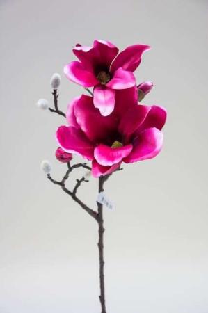 Ceriserød magnoliekvist