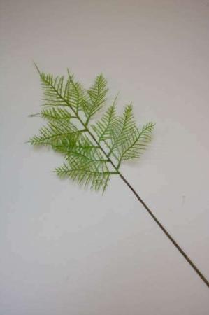 Kunstigt bregneblad - plumosus blad