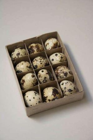 Vagtelæg. Påskeæg. Natur påskeæg. Natur æg. Plettede æg. Påskeæg 2019