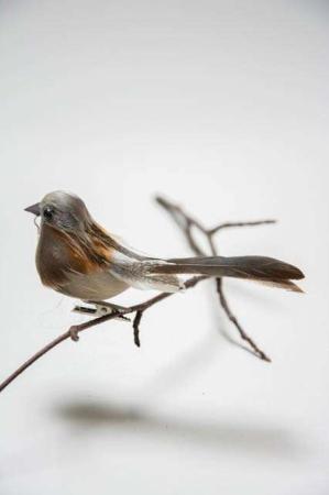 Fugl på clips - natur med korte halefjer. Dekofugl til æresport. Dekofugl til dekorationer. Naturfarvet fugl på clips. Fugl med naturlige fjer.