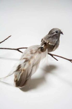 Fugl på clips - natur med lange halefjer. Dekofugl til æresport. Dekofugl til dekorationer. Naturfarvet fugl på clips. Fugl med naturlige fjer.