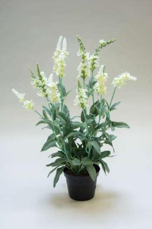 Kunstig ærenspris i potte. Kunstig potteplante. Pollenfri blomster. Pollenfri planter. Kunstig grøn plante med hvide blomster i potte. Potteplante af kunstigt materiale. Plastic blomst. Kunstig Veronica.