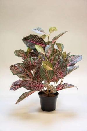 Kunstig fittonia i potte. Kunstig potteplante. Pollenfri blomster. Pollenfri planter. Kunstig grøn plante i potte. Potteplante af kunstigt materiale. Plastic blomst med lyserøde blade. Kunstig rødåre i potte.