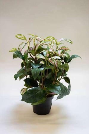 Kunstig hoya med lyserøde blade. Kunstig potteplante. Pollenfri blomster. Pollenfri planter. Kunstig grøn plante i potte. Potteplante af kunstigt materiale. Plastic blomst med lyserøde blade.
