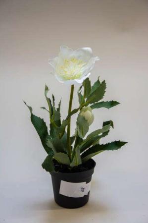 Kunstig hvid julerose i potte. Kunstigt blad. Kunstig blomst. Plastic blomst. Kunstig plante.