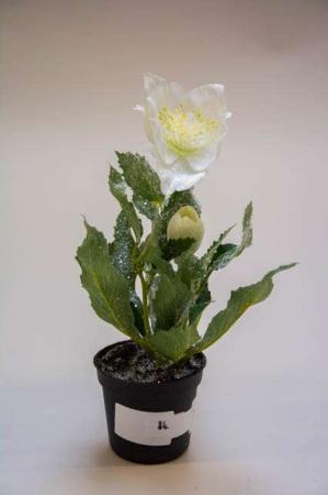 Kunstig hvid julerose med glimmer. Kunstigt blad. Kunstig blomst. Plastic blomst. Kunstig plante. Julerose med sølvglitter.