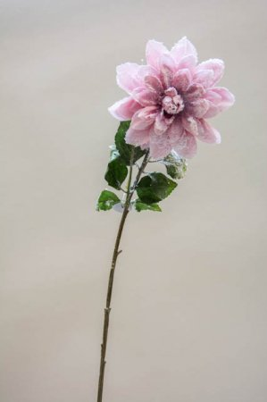 Kunstig lyserød dahlia med glimmer. Kunstig gren til dekoration. Juleblomst med sne. Dekogren til juledekoration. Dahliagren til æresport. Dekoration til bryllup. Lyserød blomst med glimmer.