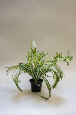 Kunstig væddeløber i potte. Kunstig potteplante. Pollenfri blomster. Pollenfri planter. Kunstig grøn plante i potte. Potteplante af kunstigt materiale. Plastic blomst. Kunstig clorofyton.