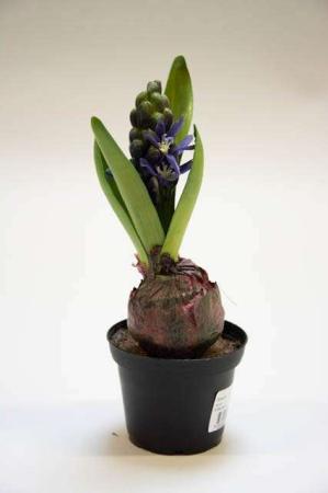 Lilla hyacint i potte. Kunstig hyacint med lilla blomster. Kunstig dekomateriale. Kunstigt blad. Kunstig blomst. Plastic blomst. Kunstig plante.