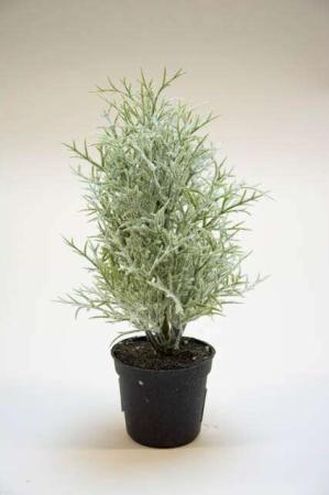 Lille grøn plante med sne. Lille kunstig plante i potte. Juletræ med sne. Kunstigt juletræ i potte. Mini juletræ med sne.
