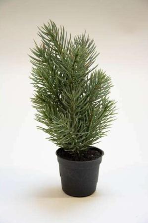 Mini grantræ i potte. Mini juletræ. Kunstigt juletræ. Kunstigt grantræ. Kunstigt træ til jul.