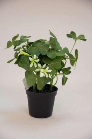 Kunstig grøn plante - oxalis. Lille kunstig blomst - grøn og hvid.