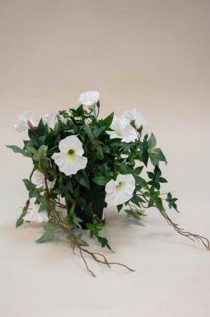 Kunstig potteplante med blomster - ipomea. Kunstige hvide blomster.