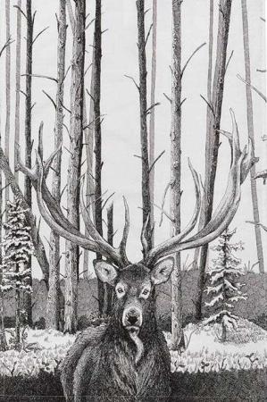 Viskestykke af økologisk bomuld fra Koustrup og Co. Viskestykket med kronhjort i skov.