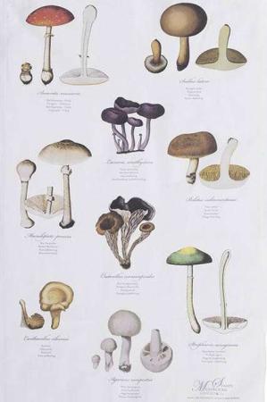 Viskestykke af økologisk bomuld fra Koustrup og Co. Viskestykket svampe og navne.