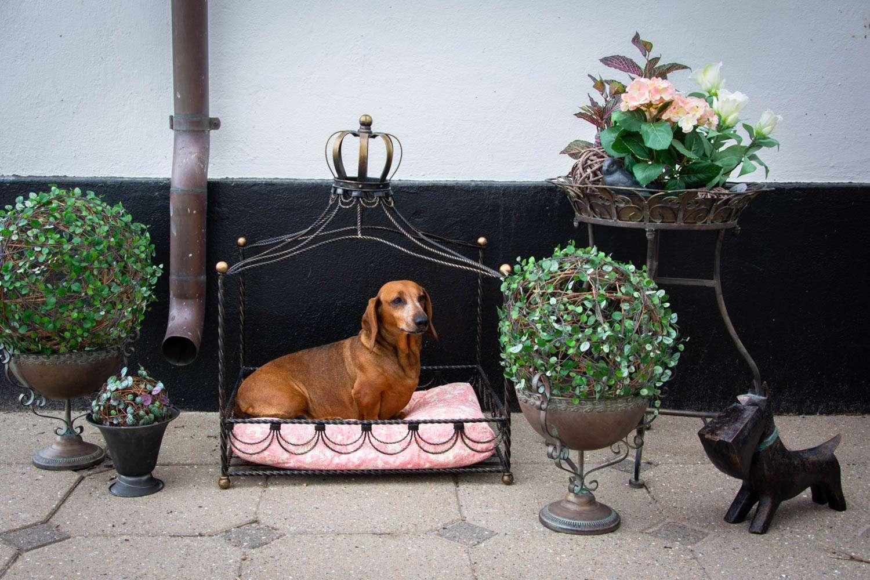 inspiration til terrasse indretning med hund