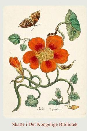8 kort med konvolut med blomster motiver - Skatte i det kongelige bibliotek