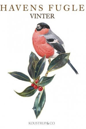Æske med 8 kort med konvolut - havens fugler vinter