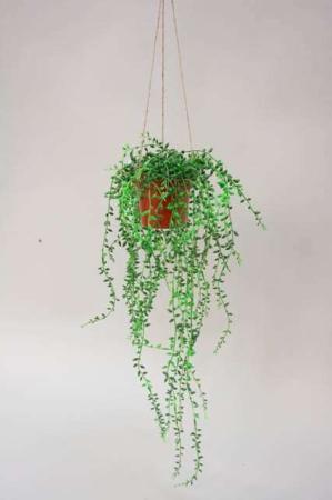 Kunstig hænge plante - perler på snor - Senecio