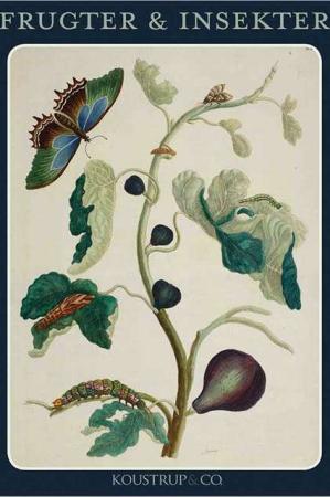 8 kort med kuvert med motiv af frugter og insekter