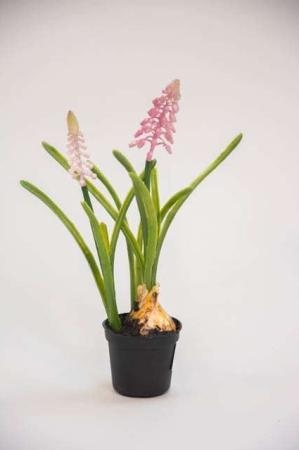 Kunstig lyserød perlehyacint i potte