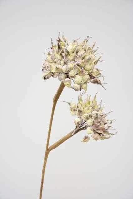 Kunstig gren med små blomsterløg - Gren med små grønne blomsterløg